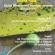 Analisis Morfoanatomi Cosmostigma racemosum (aslepiadaceae) | Seri Mimbar Akademik #2