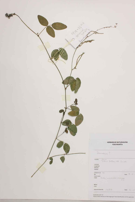 Herbarium Baturagung Yogyakarta cpIMG_0002