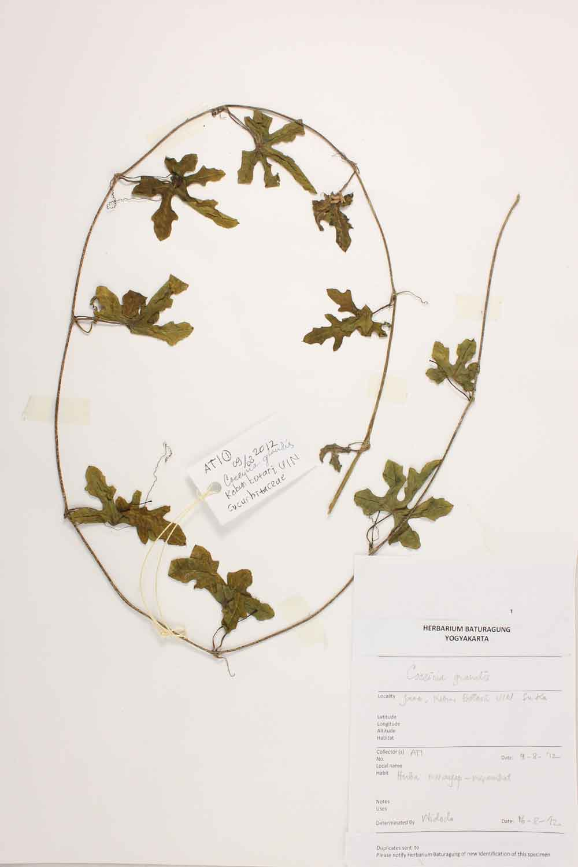 Herbarium Baturagung Yogyakarta cpIMG_0005