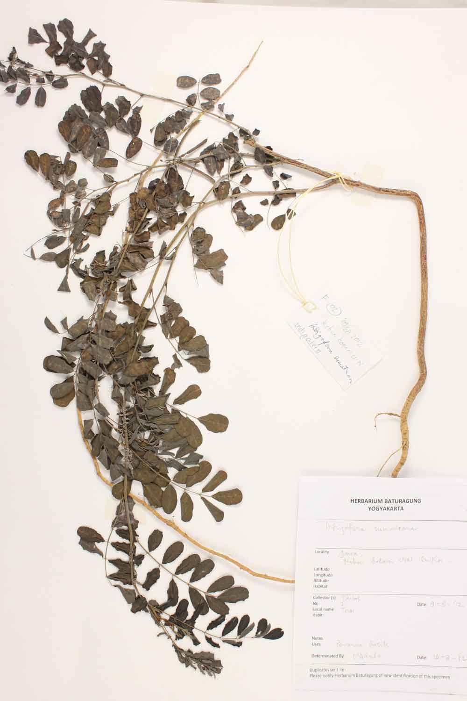 Herbarium Baturagung Yogyakarta cpIMG_0007