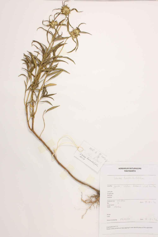 Herbarium Baturagung Yogyakarta cpIMG_0012
