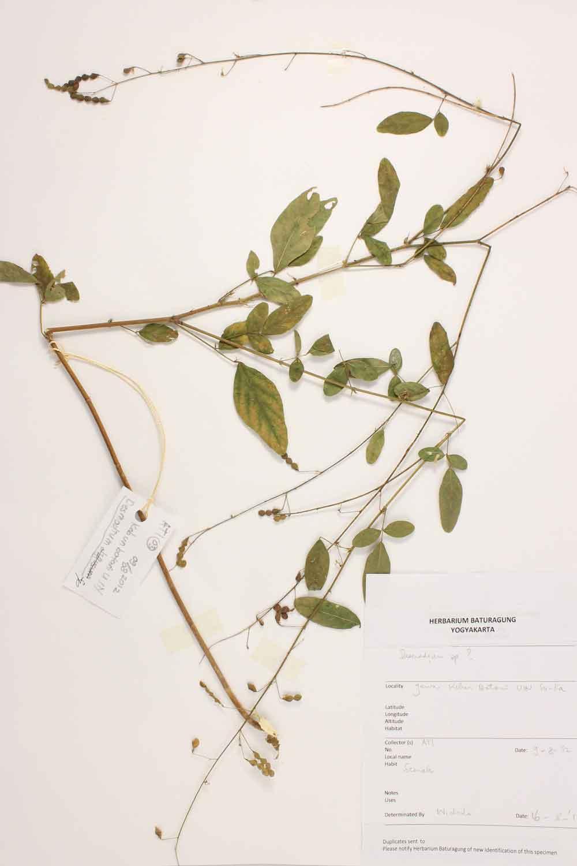 Herbarium Baturagung Yogyakarta cpIMG_0013