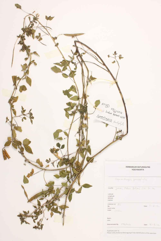Herbarium Baturagung Yogyakarta cpIMG_0020