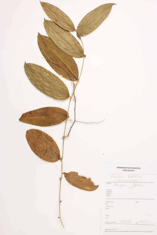 Herbarium Baturagung Yogyakarta cpIMG_0023
