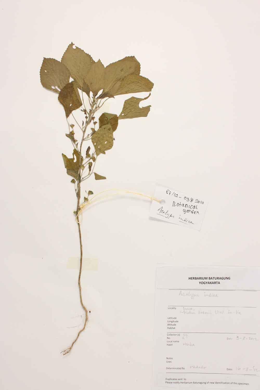 Herbarium Baturagung Yogyakarta cpIMG_0028