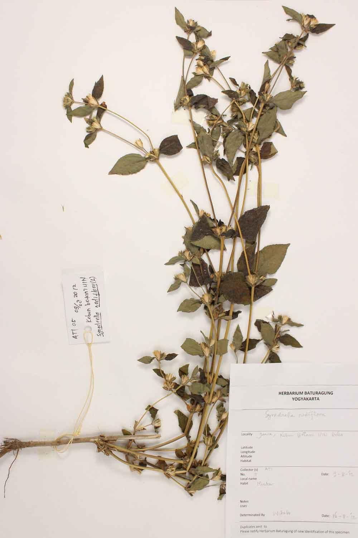 Herbarium Baturagung Yogyakarta cpIMG_0031
