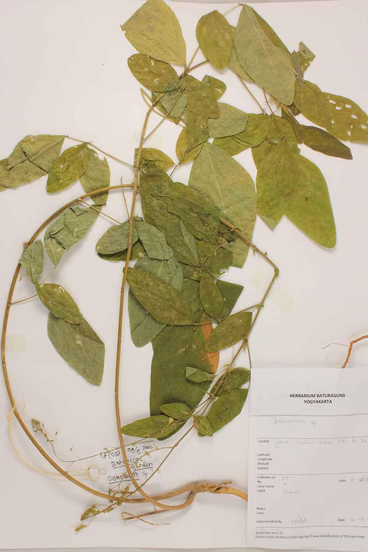 Herbarium Baturagung Yogyakarta cpIMG_0034
