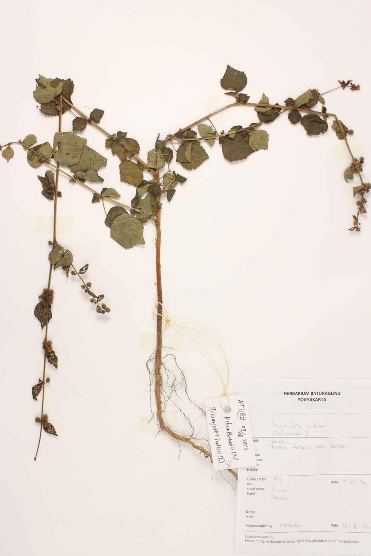 Herbarium Baturagung Yogyakarta cpIMG_0036