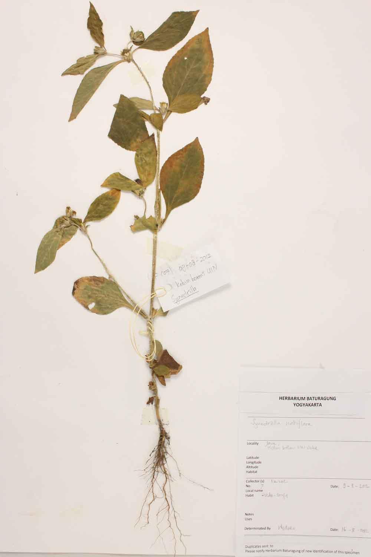 Herbarium Baturagung Yogyakarta cpIMG_0039