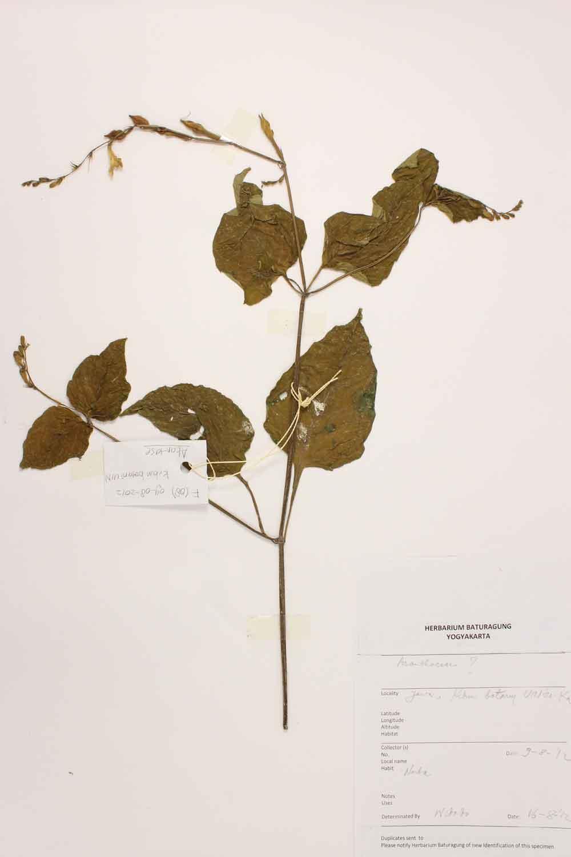 Herbarium Baturagung Yogyakarta cpIMG_0046
