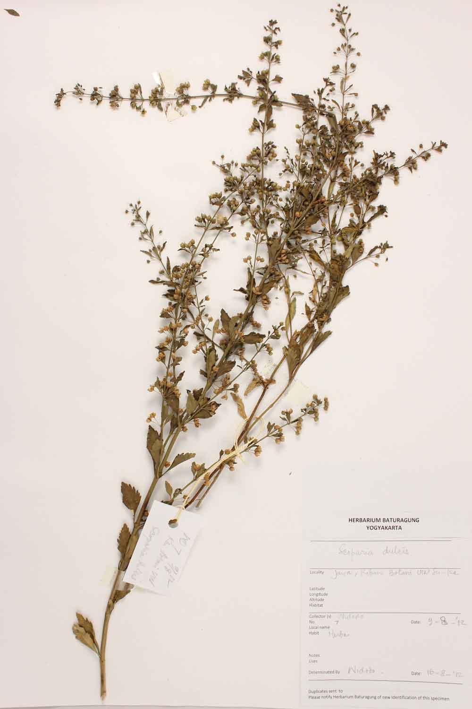 Herbarium Baturagung Yogyakarta cpIMG_0051