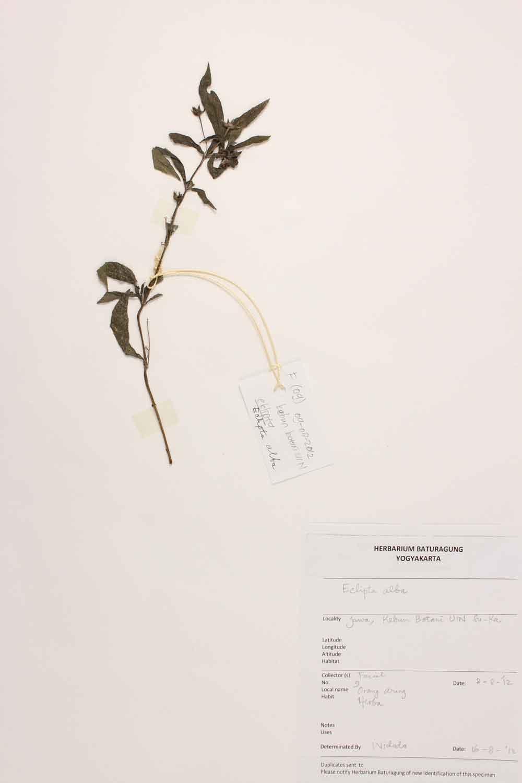 Herbarium Baturagung Yogyakarta cpIMG_0057
