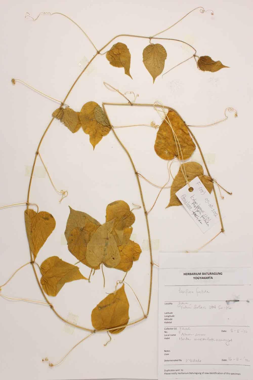 Herbarium Baturagung Yogyakarta cpIMG_0060