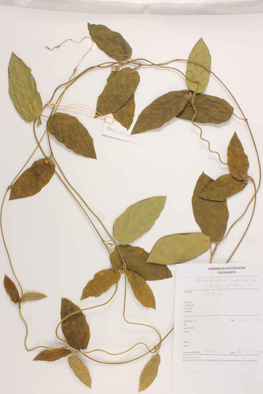 Herbarium Baturagung Yogyakarta cpIMG_0065
