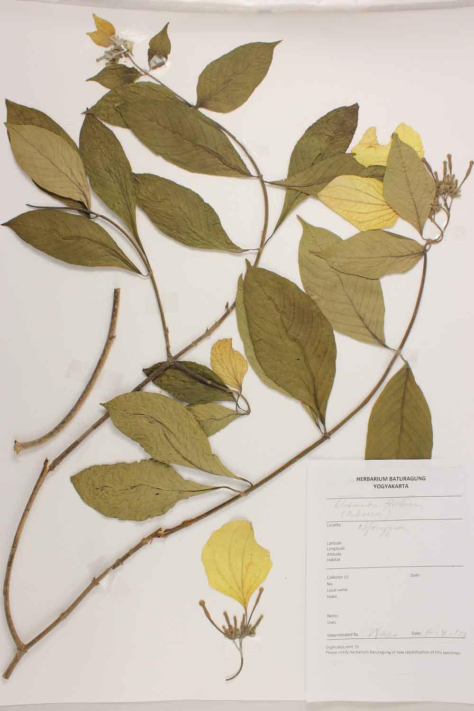 Herbarium Baturagung Yogyakarta cpIMG_0067