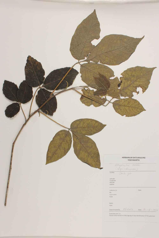 Herbarium Baturagung Yogyakarta cpIMG_0071
