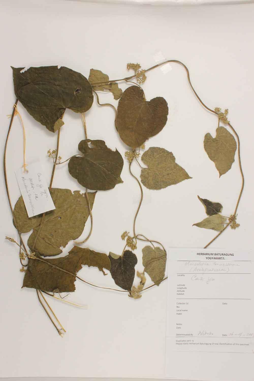 Herbarium Baturagung Yogyakarta cpIMG_0072
