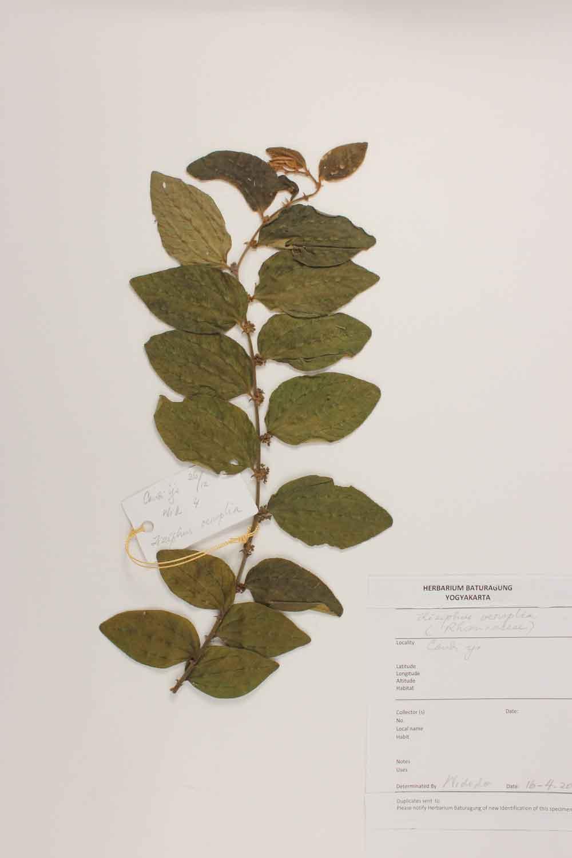 Herbarium Baturagung Yogyakarta cpIMG_0074