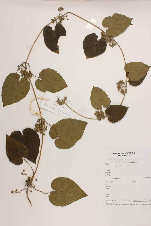 Herbarium Baturagung Yogyakarta cpIMG_0075