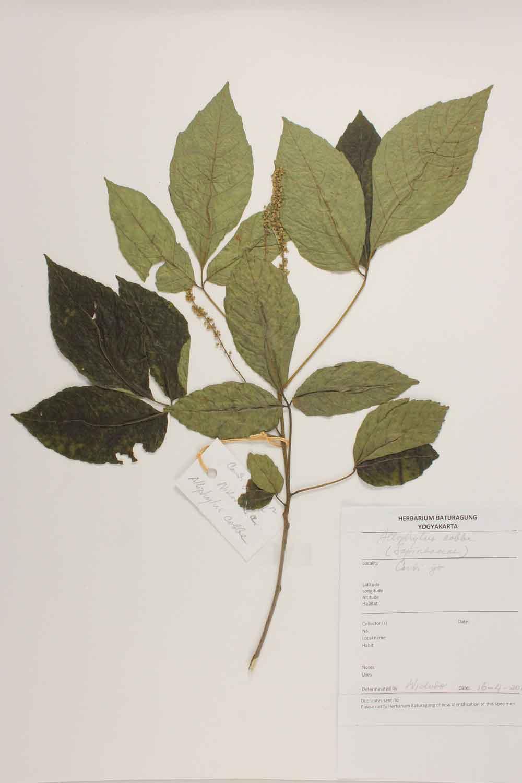 Herbarium Baturagung Yogyakarta cpIMG_0077