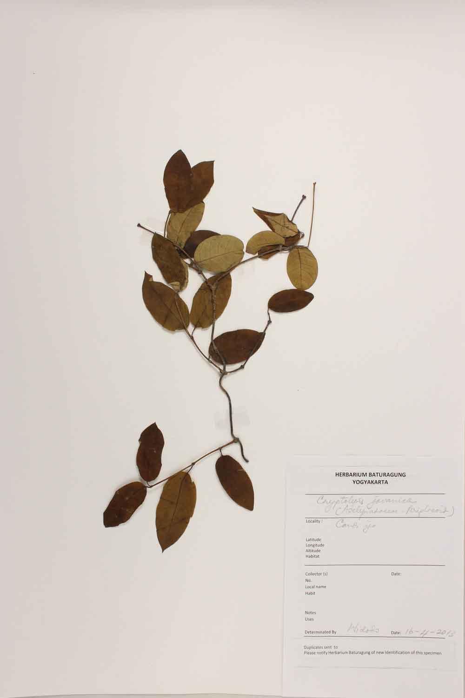 Herbarium Baturagung Yogyakarta cpIMG_0078