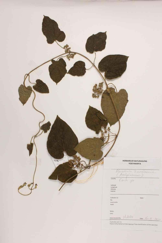 Herbarium Baturagung Yogyakarta cpIMG_0080