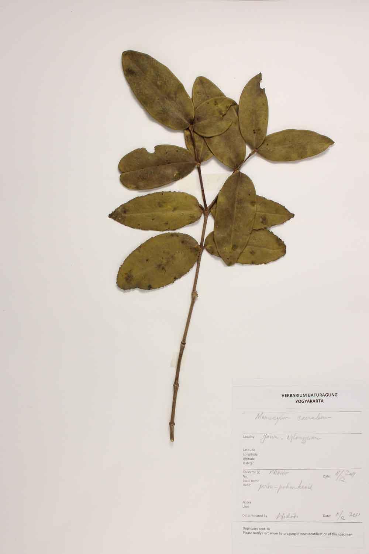 Herbarium Baturagung Yogyakarta cpIMG_0087