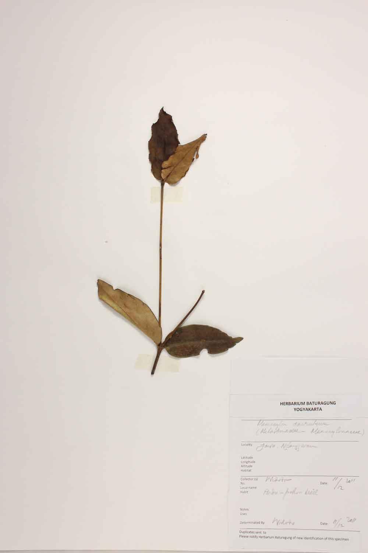 Herbarium Baturagung Yogyakarta cpIMG_0088