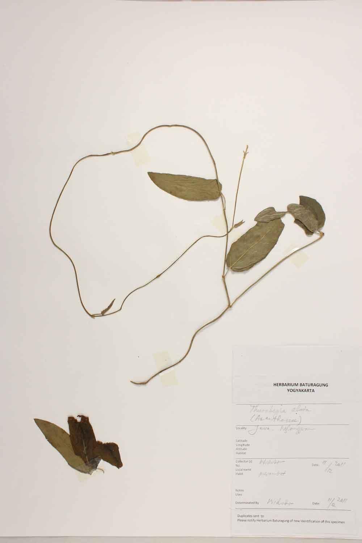 Herbarium Baturagung Yogyakarta cpIMG_0089