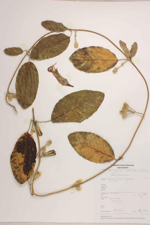 Herbarium Baturagung Yogyakarta cpIMG_0091