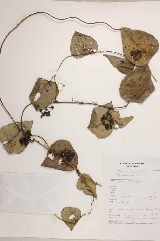Herbarium Baturagung Yogyakarta cpIMG_0092