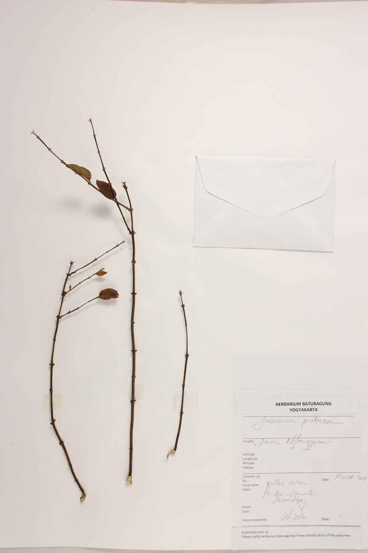Herbarium Baturagung Yogyakarta cpIMG_0093