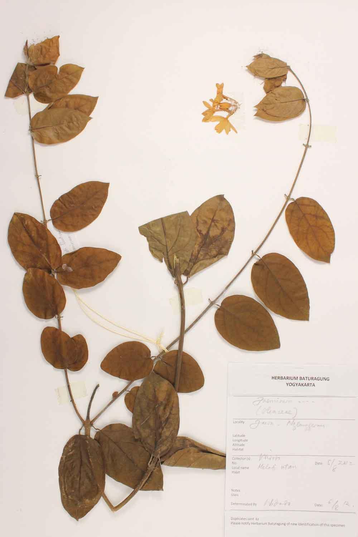 Herbarium Baturagung Yogyakarta cpIMG_0096
