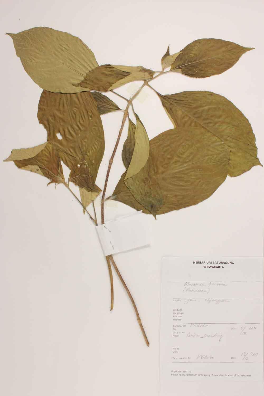 Herbarium Baturagung Yogyakarta cpIMG_0097