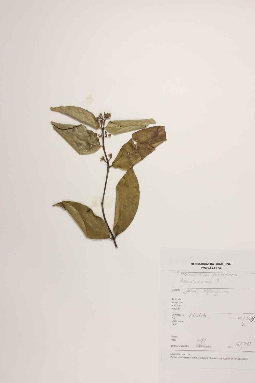 Herbarium Baturagung Yogyakarta cpIMG_0098