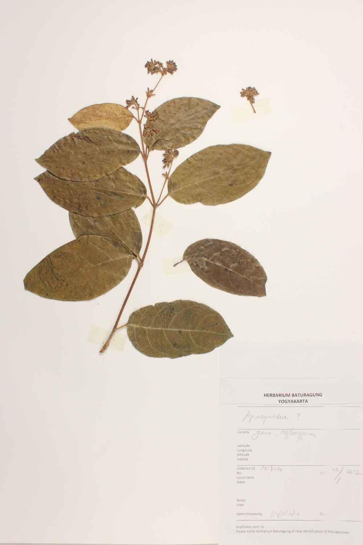 Herbarium Baturagung Yogyakarta cpIMG_0101