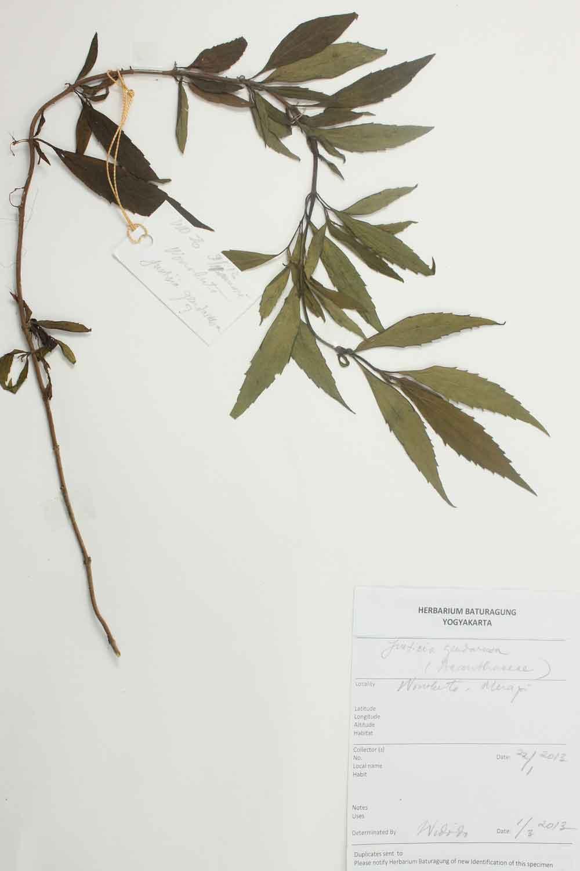 Herbarium Baturagung Yogyakarta cpIMG_0116