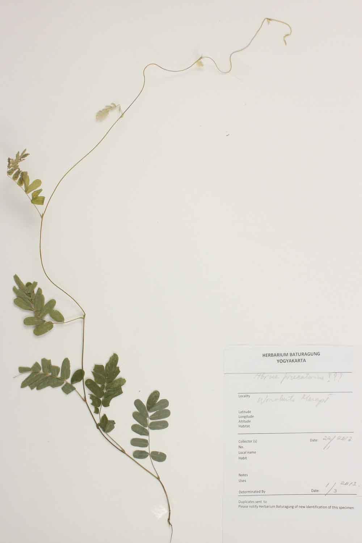 Herbarium Baturagung Yogyakarta cpIMG_0126