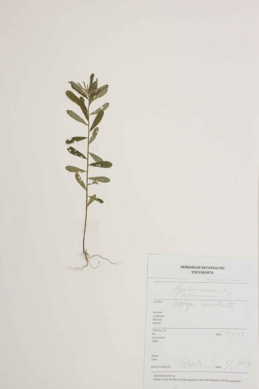 Herbarium Baturagung Yogyakarta cpIMG_0128