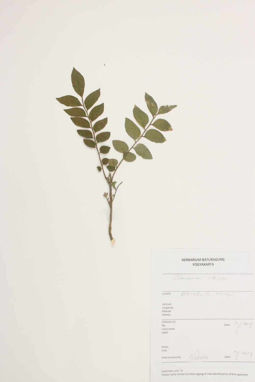 Herbarium Baturagung Yogyakarta cpIMG_0130