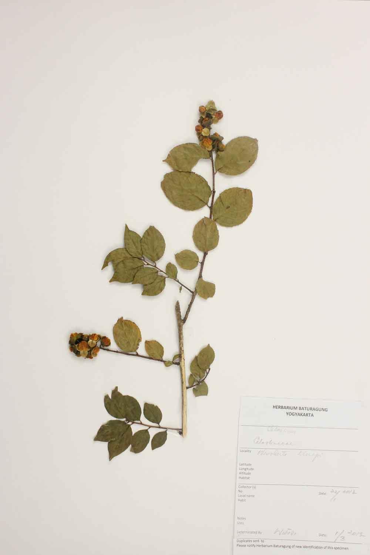 Herbarium Baturagung Yogyakarta cpIMG_0135
