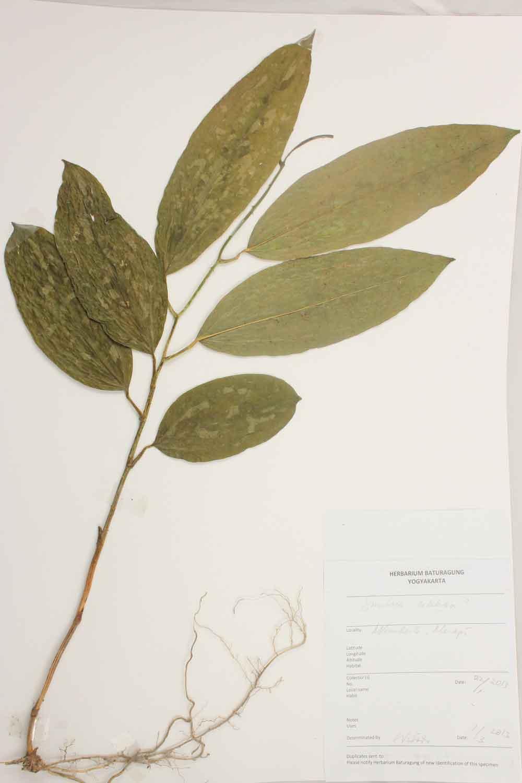 Herbarium Baturagung Yogyakarta cpIMG_0138