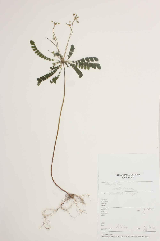 Herbarium Baturagung Yogyakarta cpIMG_0139