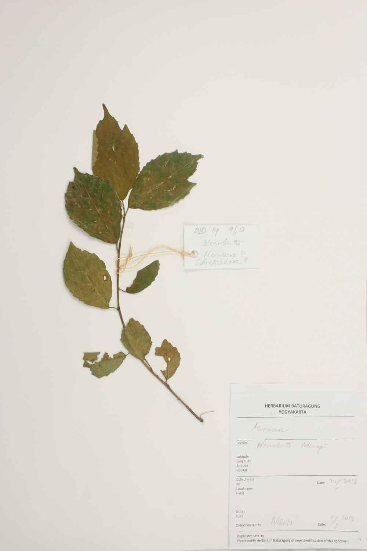 Herbarium Baturagung Yogyakarta cpIMG_0143
