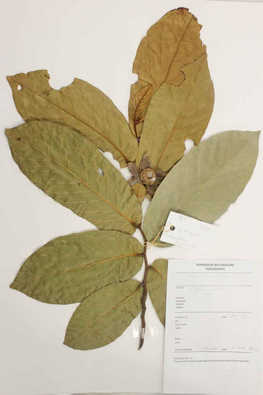 Herbarium Baturagung Yogyakarta cpIMG_0158