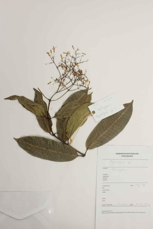 Herbarium Baturagung Yogyakarta cpIMG_0163