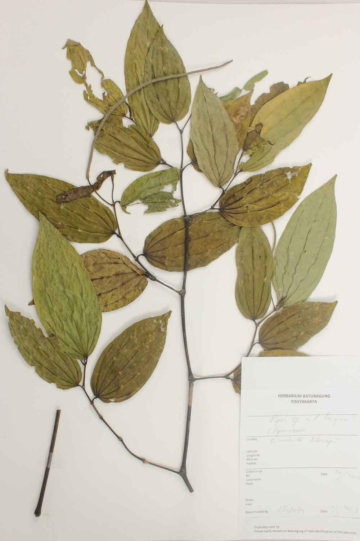 Herbarium Baturagung Yogyakarta cpIMG_0170