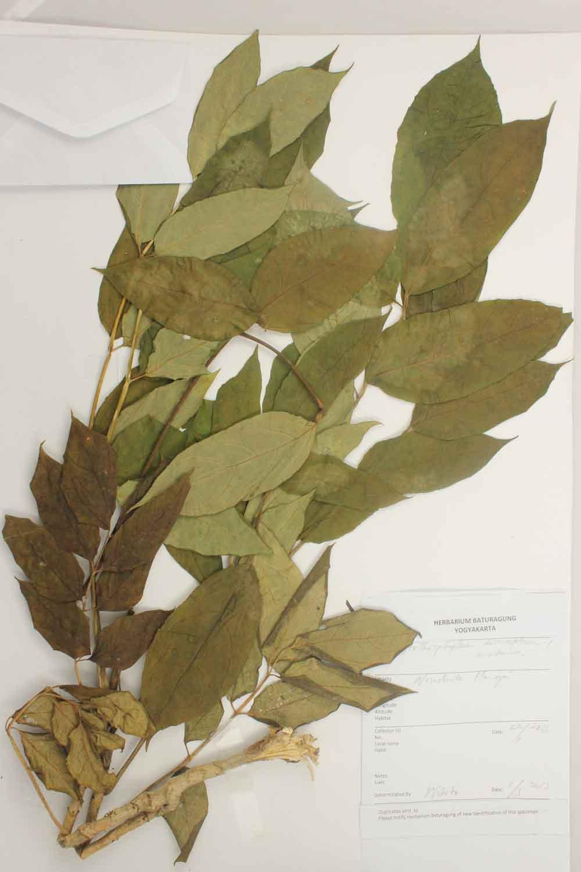 Herbarium Baturagung Yogyakarta cpIMG_0181