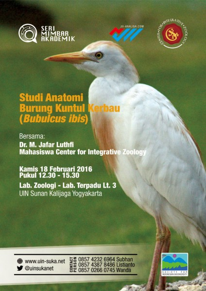 Studi Anatomi Burung  Kuntul Kerbau (<i>Bulbucus ibis</i>) - Seri Mimbar Akademik #50