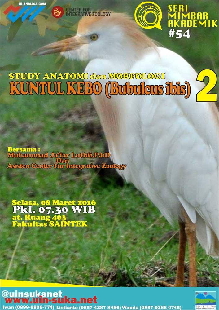 Studi Anatomi dan Morfologi Kuntul Kebo (Bubulcus ibis) 2 - Seri Mimbar Akademik #54